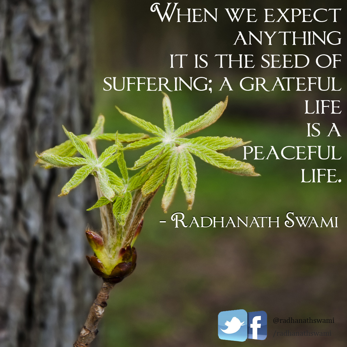 Expectation_quotes02